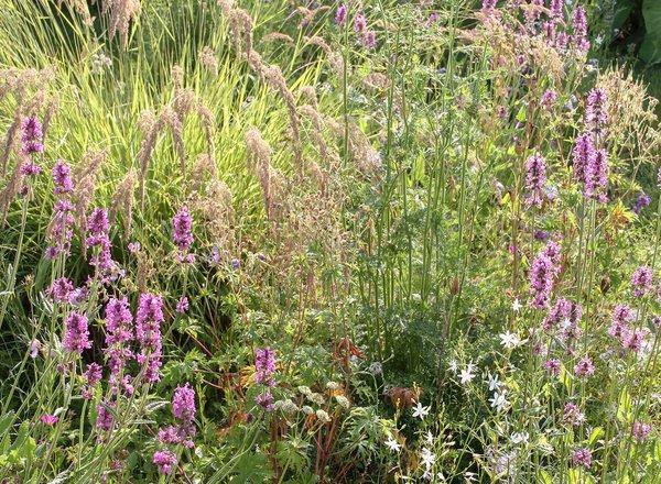 Sellana Naturgarten