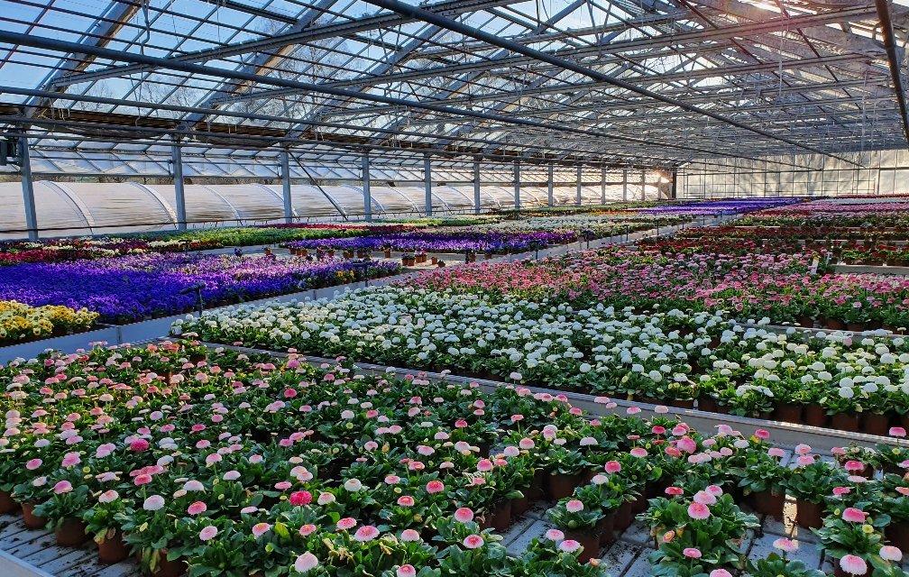 Medienmitteilung Bild Corona Blumen