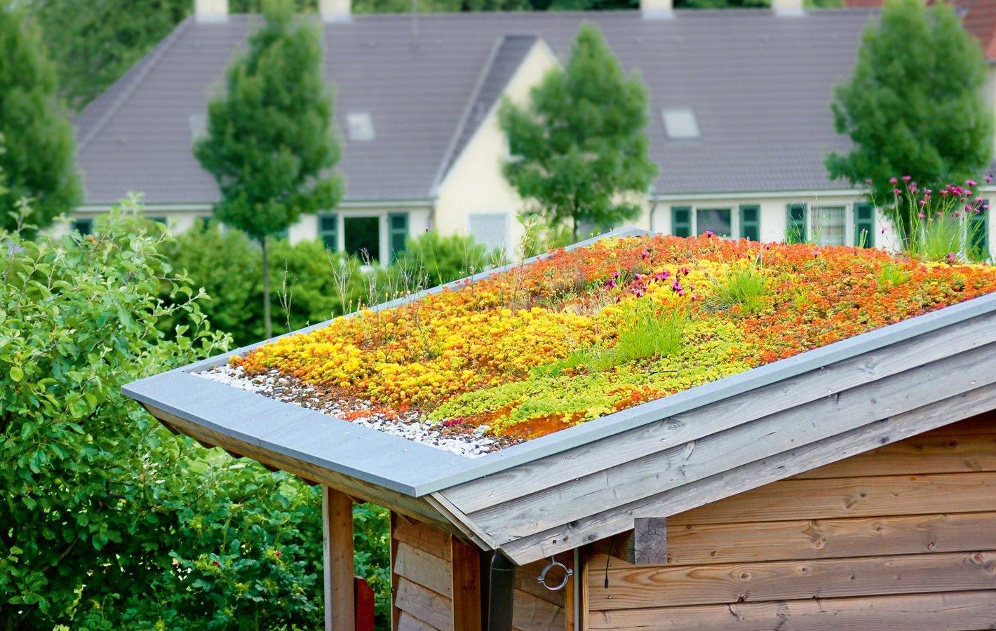 Dach mit Sedum
