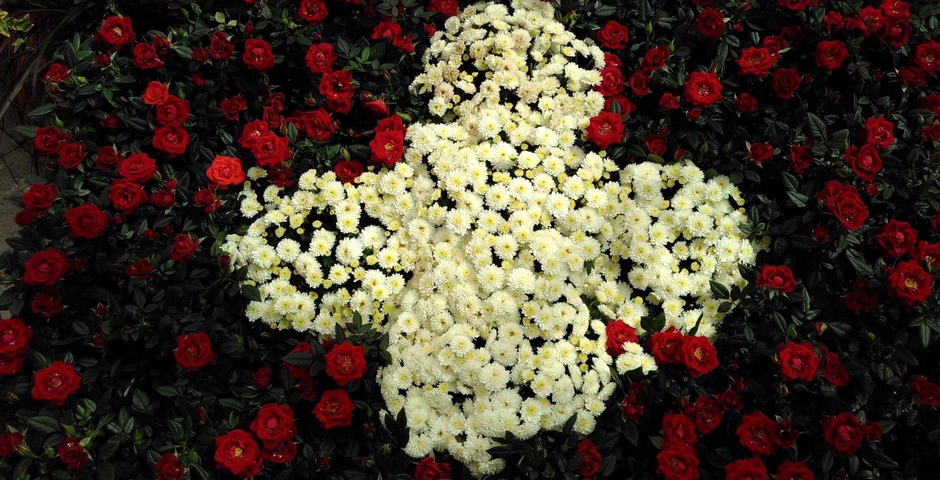 Rosen als Schweizer Pflanzen