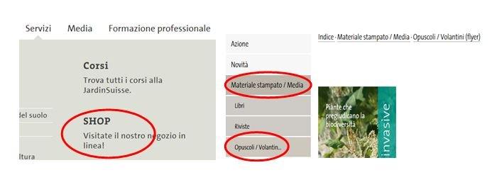 Invasive Neophyten bestellen italienisch
