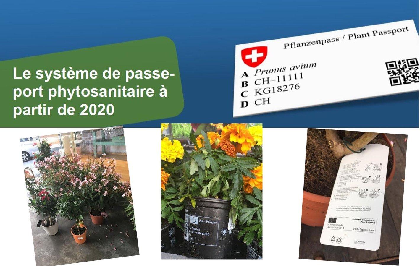 Noueveau système passeport phytosanitaire 2020