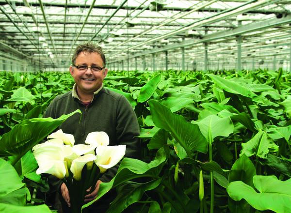Produktion Schnittblumen