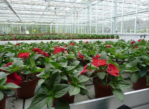 """Schulung """"Umweltgerechte Zierpflanzenproduktion"""""""