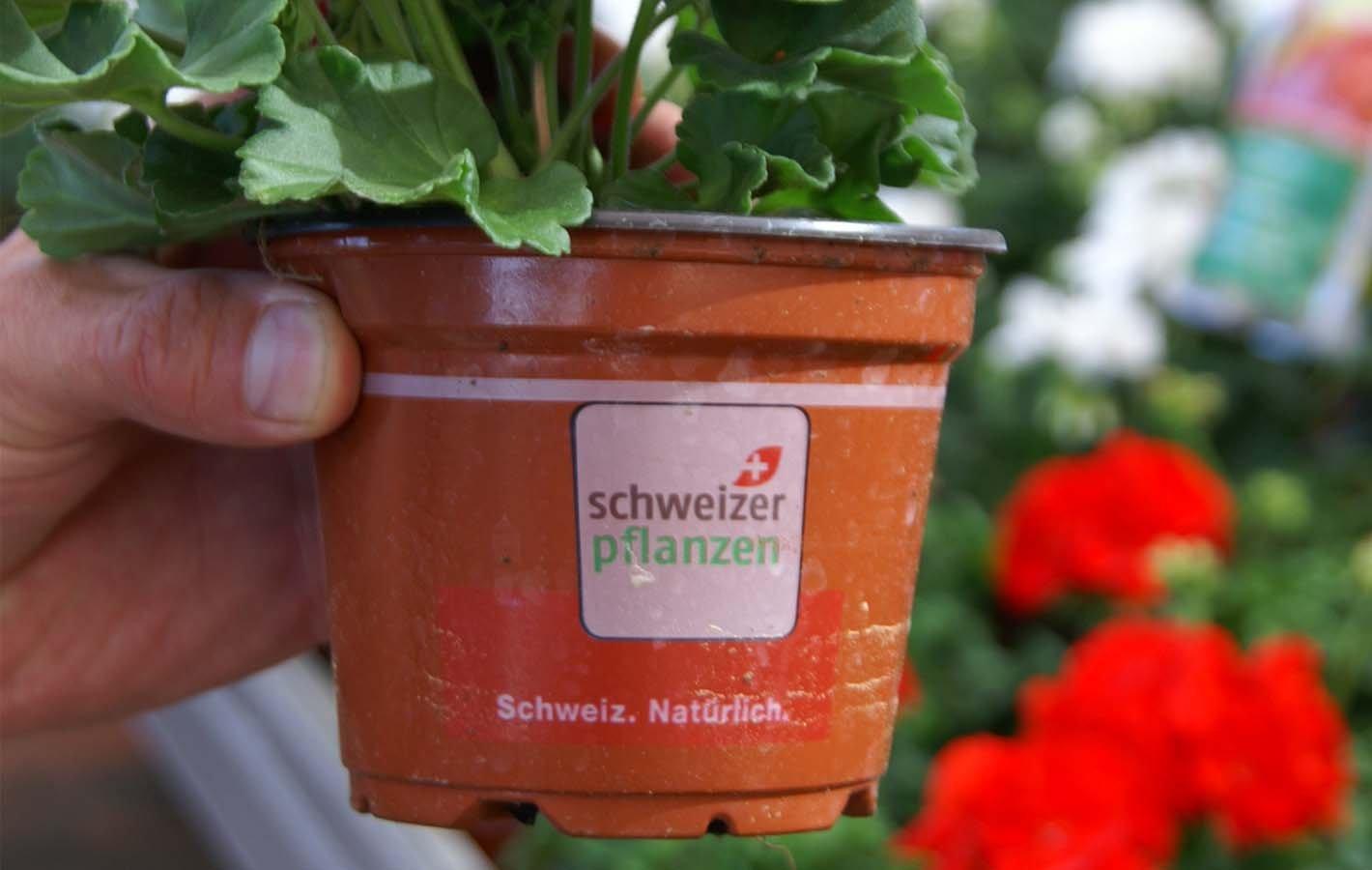 Schweizer Pflanzen 2