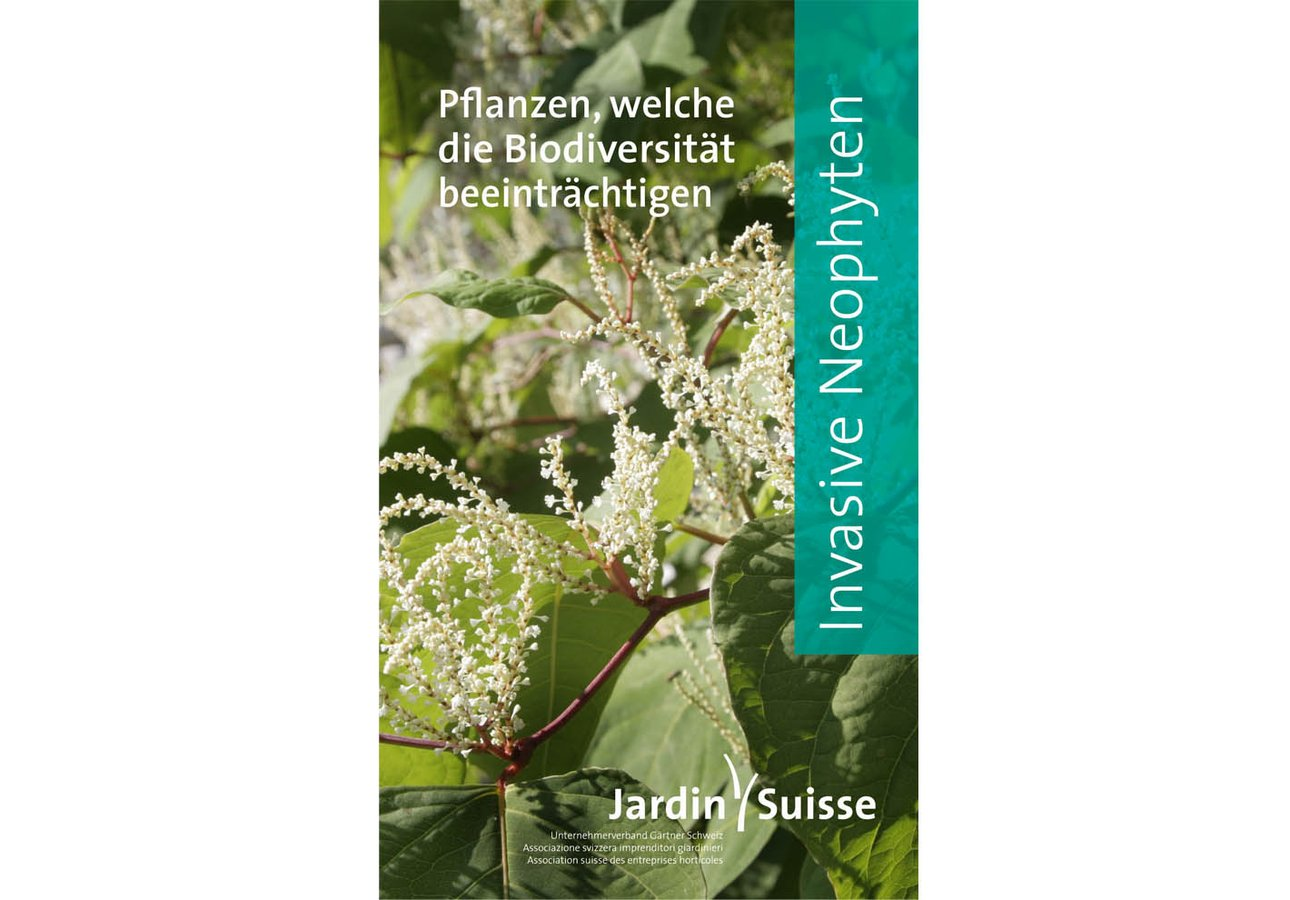 Broschüre Invasive Neophyten