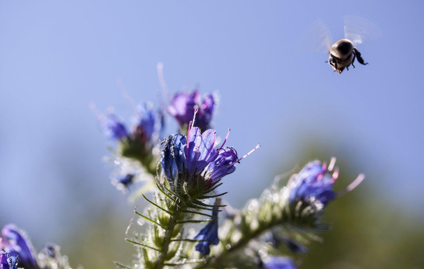 Umweltschutz_biodiversität_bild1_web