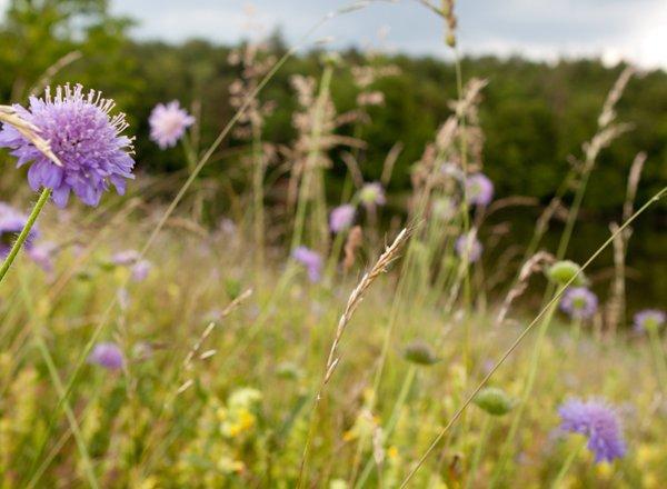 Umweltschutz_biodiversität_bild2_web