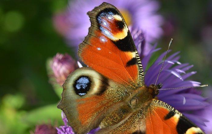 Umweltschutz_biodiversität_bild3_web