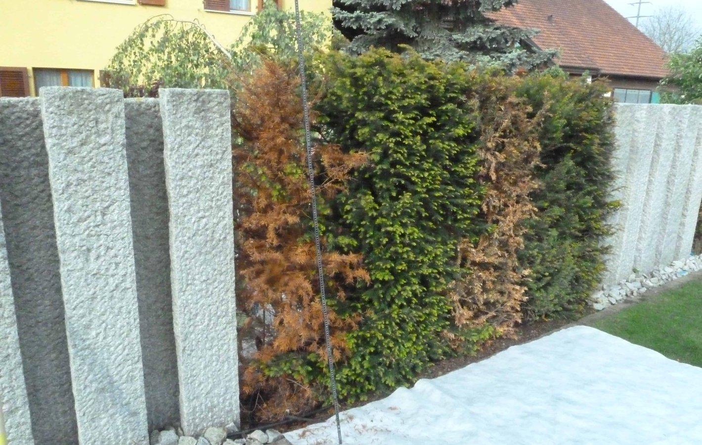 Bepflanzung Gartenbau Fehler