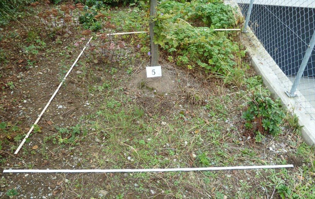 Bepflanzung Gutachten Gartenbau