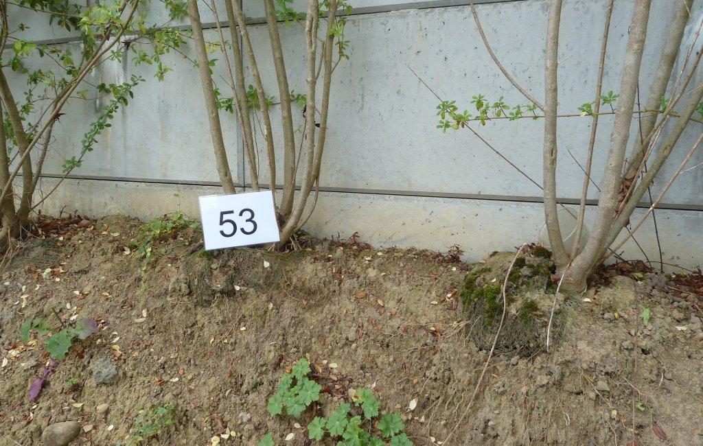 Pfusch beim Gartenbau - Gartengutachter
